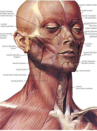Ragioni di pigmentazione della persona