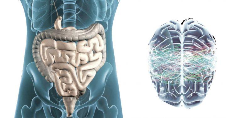 intestino-e-cervello